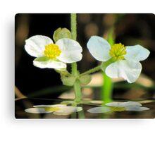 Swamp Flower Canvas Print