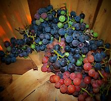 First Grape  Harvest by Tracey Hampton