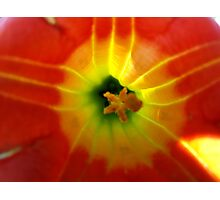 Trumpet flower Photographic Print