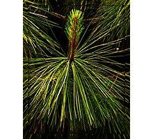 Prickly Photographic Print