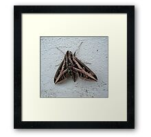 Sphinx Moth After Rain Framed Print