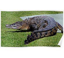 Salt water Crocodile...........! Poster