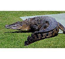 Salt water Crocodile...........! Photographic Print
