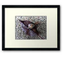 Funky Snail Framed Print