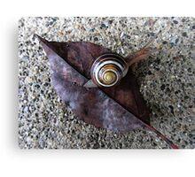 Funky Snail Canvas Print
