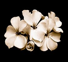 Bloss's Bloom by Melania