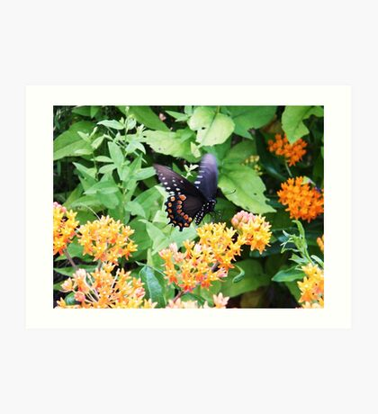 Butterfly at Point Pelee, Ontario Art Print