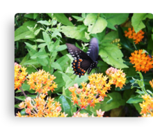 Butterfly at Point Pelee, Ontario Canvas Print