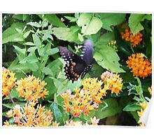 Butterfly at Point Pelee, Ontario Poster