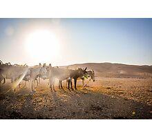 Negev Donkeys Photographic Print