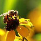 Bee and Bokeh by KatsEyePhoto