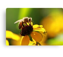 Bee and Bokeh Canvas Print