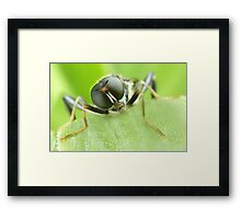 Bug.... Framed Print