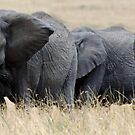 The Herd by Brad Francis
