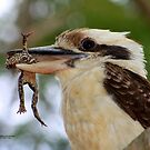 Kookaburra and catch by robmac