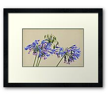 Lilies of the Nile Blowing in the Breeze Framed Print