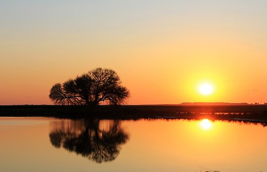 It's all about the light... Sunrise... Along the rural road, Free State, South Africa by Qnita