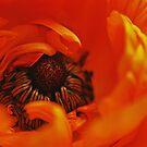 Intensely Orange by IngeHG