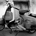 Dog on Bike by chrisfranklin1