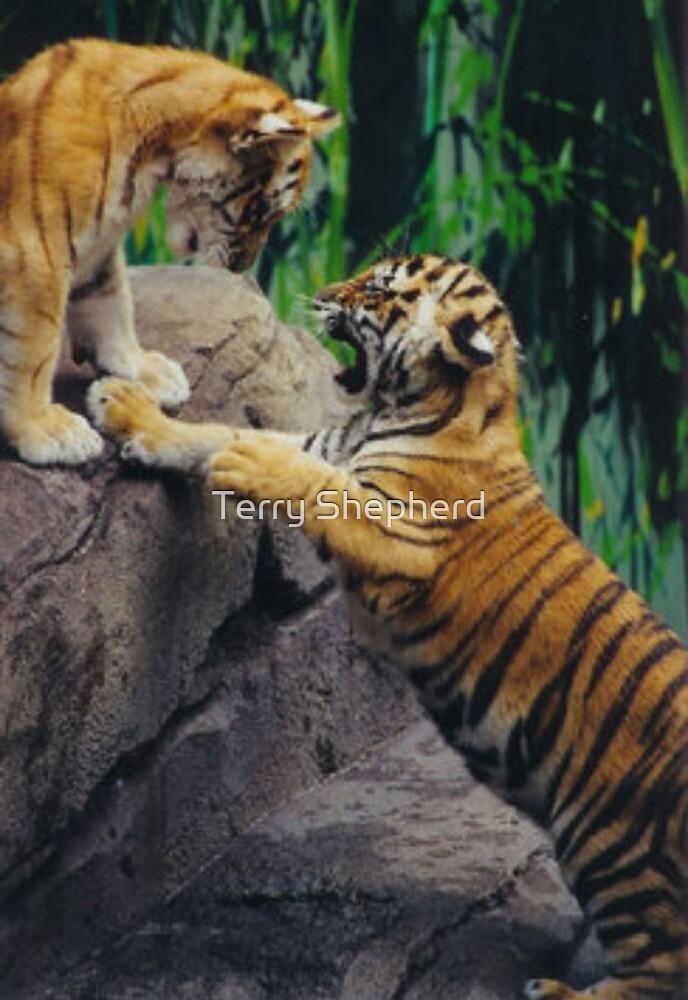 Playful Kittens by Terry Shepherd
