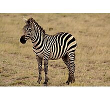 Africa Continues - Stripey Perfection Photographic Print
