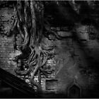 Tree in Wall by chrisfranklin1