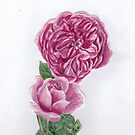 A rose and a rose by acquart