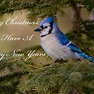 Christmas Card - Blue Jay by Michael Cummings