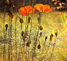 Poppies.... by Mike  Waldron