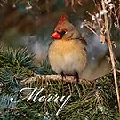 Christmas Card - Female Cardinal by Michael Cummings