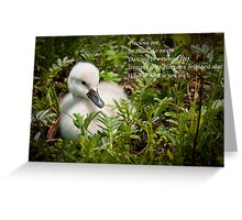 Baby Card - Mute Swan Greeting Card
