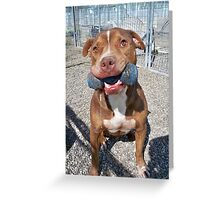 NO-KILL UNITED : EDDIE'S TOY Greeting Card