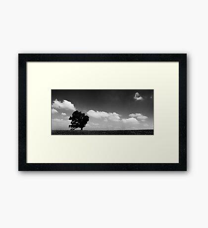 standing alone tree Framed Print
