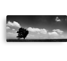 standing alone tree Canvas Print