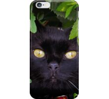Catboo in The Wild iPhone Case/Skin