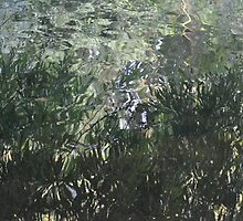 Reflected Willow by Chris1249