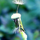 Dandelion  by Jadetang