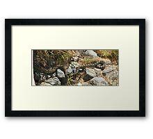 Northern Pacific Rattlesnake Pair Framed Print