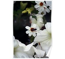 Botany 3 Poster