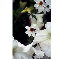 Botany 3 Photographic Print