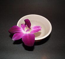 Orchid - Full bloom by irwin barneto