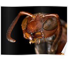 Macro Wasp Poster