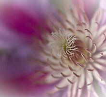...in dreams by Louise Robert