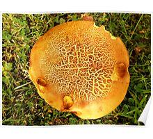 Pancake Mushroom Poster