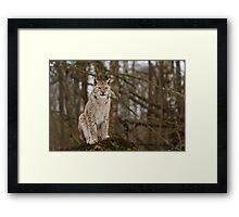 A Proud Predator Framed Print