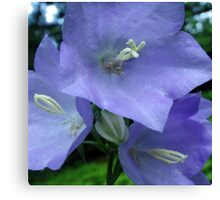 Blue Campanula Macro Canvas Print