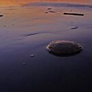 Sunset Jellyfish by Jessica Liatys