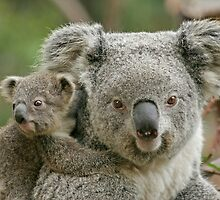 Koala and Joey by tracilaw