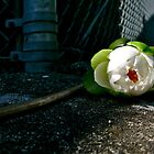 Water Lily on the Wall by VioletHalo