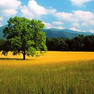 CADES COVE by Chuck Wickham